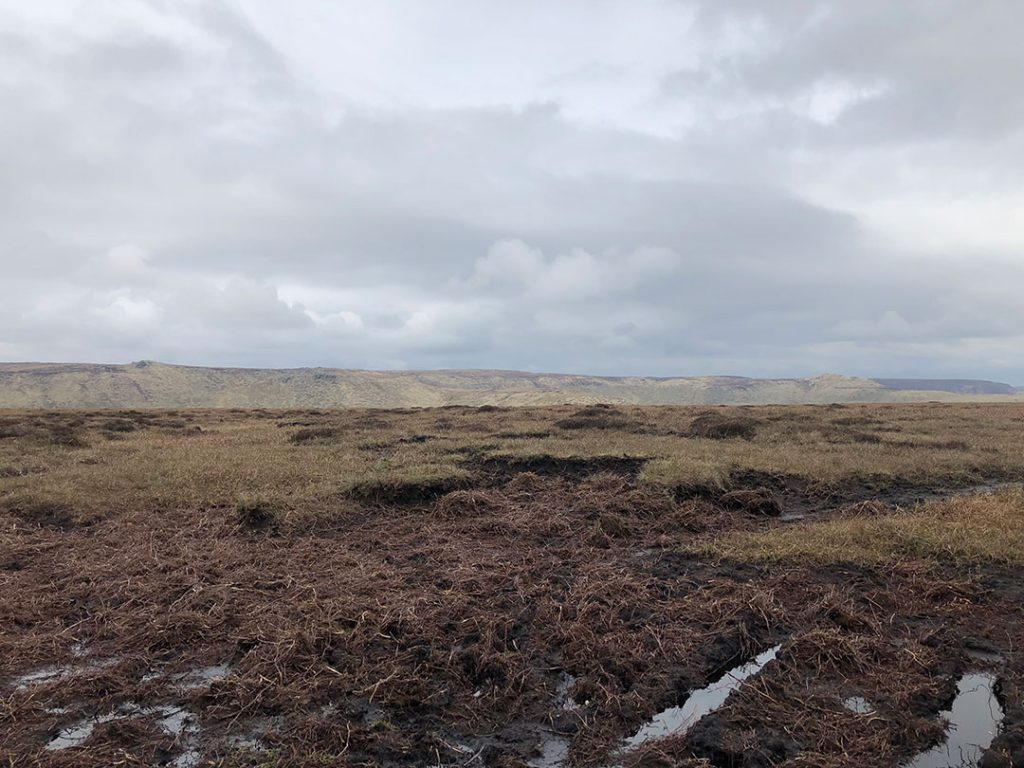 The Peat bog around Brown Knoll