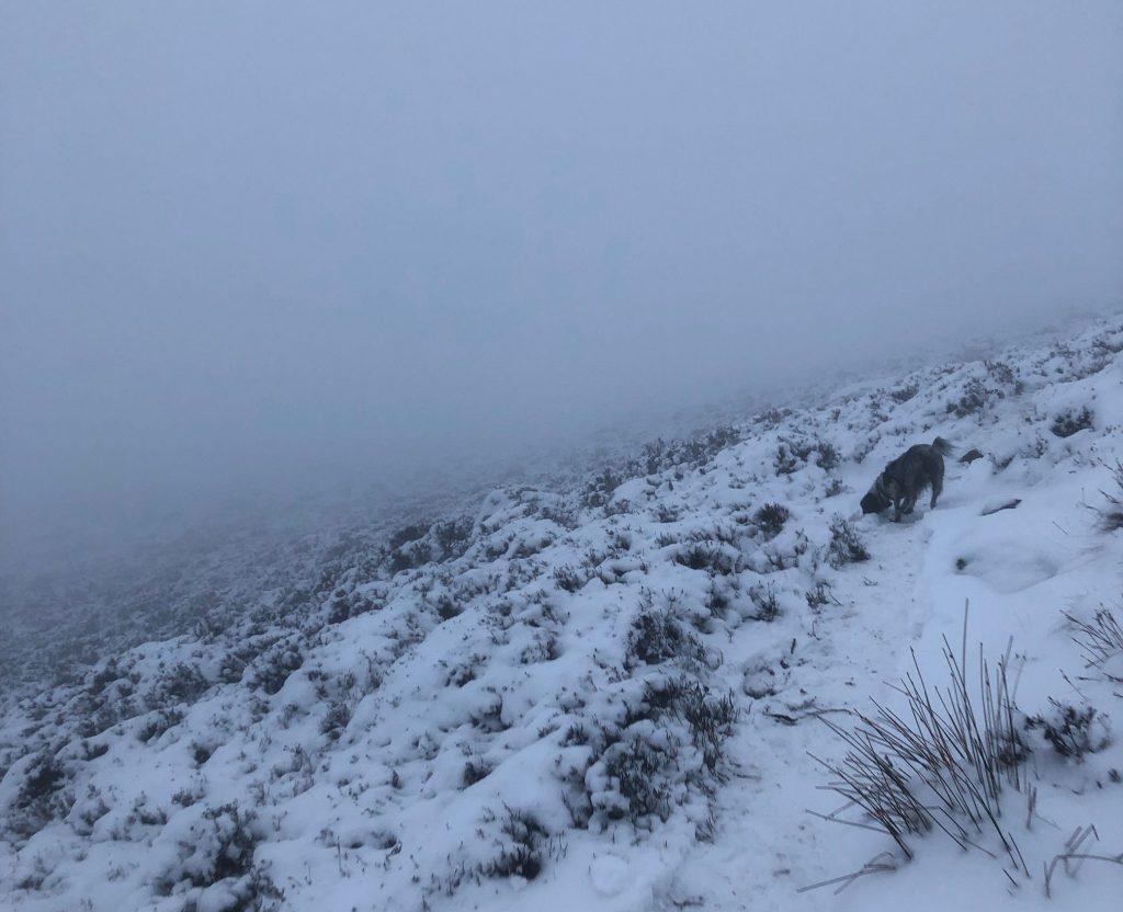 Tigger Tor in the snow